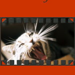 Story Sparks: Crossmediale Umsetzung meiner Storys um Kater Willy - Comicstrip