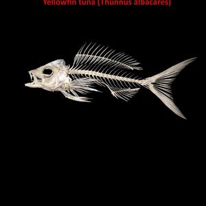 Fish Encyclopedia.