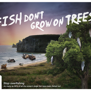 Fish don't grow on trees