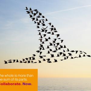 Cisco Collaboration Campaign Birds