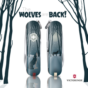 The wolves are back!