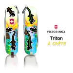 Triton à Crête - crested newt