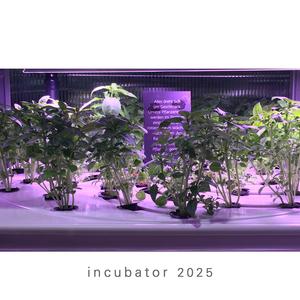 incubator 2025